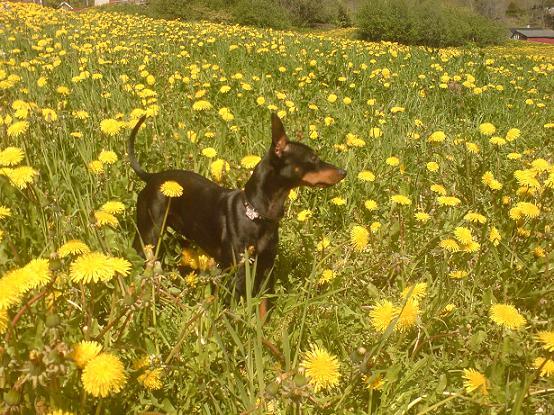 leo-i-blomstereng.JPG