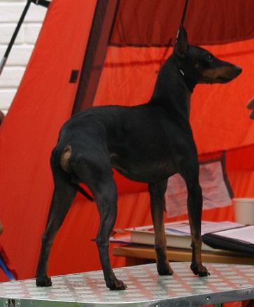 charlie-terrier.jpg